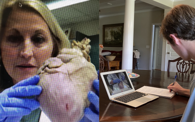 Houston Academy teacher conducts virtual pig heart dissection with Anatomy class